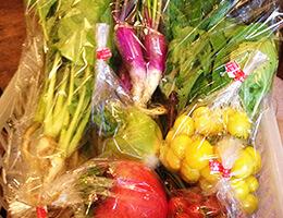 小野地さんの固定種野菜